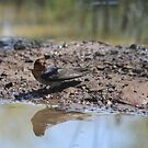 Reflections by saltbushbill