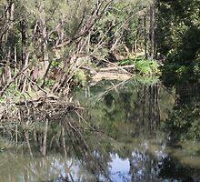 Beauty After the Storm, Tallebudgera Creek. by aussiebushstick