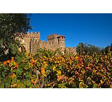 Fall at the Winery Photographic Print