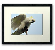 Acrobatics Framed Print