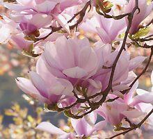 Lovely Magnolia Tree Theme by Lucie Rovná