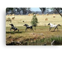 Horses at play Canvas Print