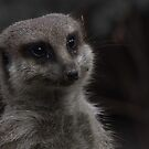 Meercat by Robyn Carter
