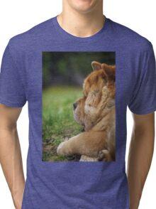 Chow-Chow dog portrait Tri-blend T-Shirt