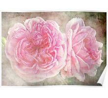 Vintge English Roses Poster
