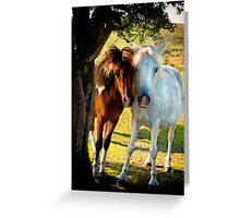 Wild Ponies on Dartmoor Greeting Card