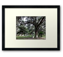 Such Beauty Artistic Photograph by Shannon Sears Framed Print