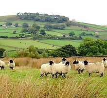 Sheep near Bolton Abbey by GeorgeOne