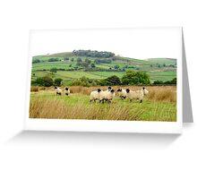 Sheep near Bolton Abbey Greeting Card