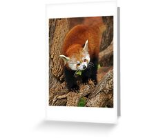 Climbing Greeting Card
