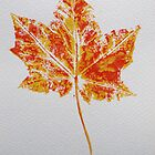 Maple Leaf Print 2 by Jennifer J Watson