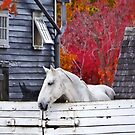 Autumn Farm With White Horse by Susan Savad