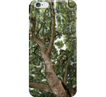 Tree Canopy iPhone Case/Skin