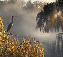 Watching Heron by kelvinLemur
