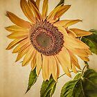 Vintage Sunflower by Edward Fielding