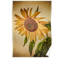 Vintage Sunflower Poster