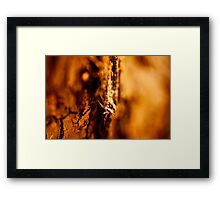 Natural abstracts Framed Print