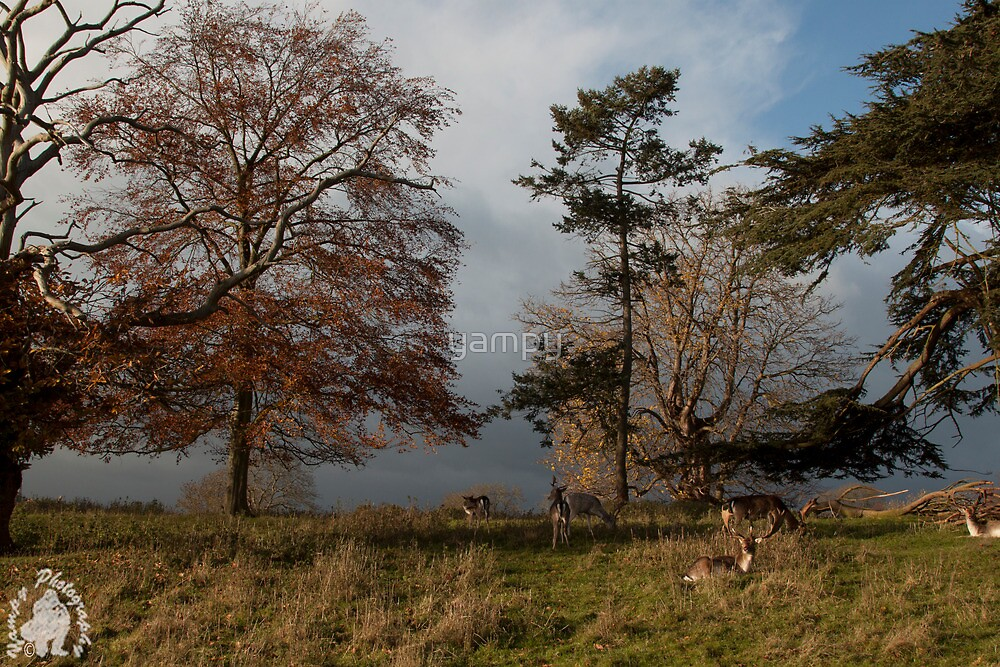 Deer in the park  by yampy