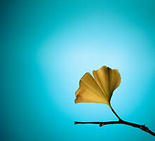 Yellow On Blue by Carrie Cole