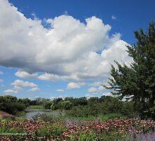 Prairie Gardens by Kathie  Chicoine