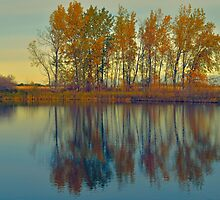Reflecting Colours by Dorothy  Pinder