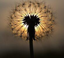 Natural Beauty by Ian Taylor