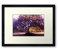 Graceful Boughs Artistic Photograph by Shannon Sears Framed Print