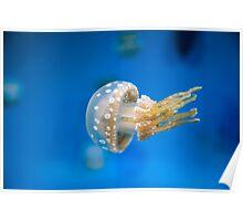 Spotted Jellyfish at Monterey Bay Aquarium Poster