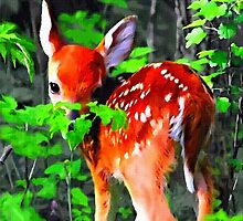 Fawn In Forest by BrianJoseph