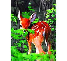 Fawn In Forest Photographic Print