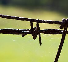 Barbed Wire by Laura Sykes