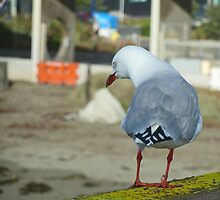 Shake Ya Tail Feather    by PictureNZ