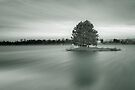 Infrared tree by Delfino
