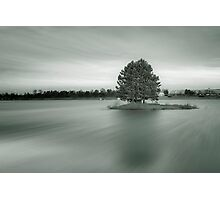 Infrared tree Photographic Print