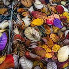 Autumn  leaves by Geraldine Lefoe