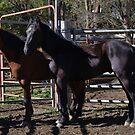 Two Stallions by Liz Worth