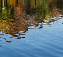 Reflecting on Autumn - Washington, DC by Georgia Mizuleva