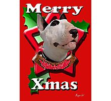 Merry Xmas from Bull Terrier Photographic Print