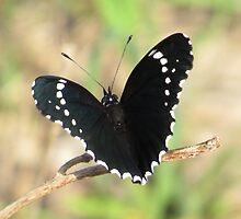 butterfly I - mariposa by Bernhard Matejka
