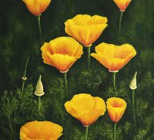 California Poppy by Veikko  Suikkanen