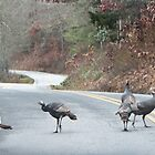 Why did the Turkey's cross the road? by KSKphotography