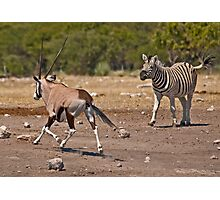 Rumble over the waterhole Photographic Print