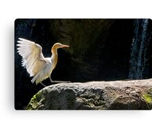 Time to spruce up those feathers Canvas Print