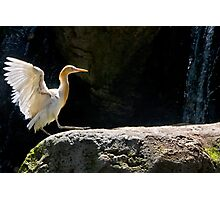 Time to spruce up those feathers Photographic Print