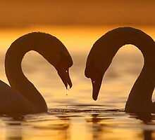 Love is in the Air  by Remo Savisaar
