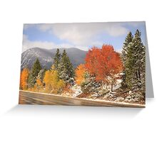 Fall Colors and Evergreens in snow Greeting Card