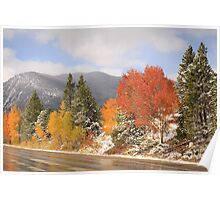 Fall Colors and Evergreens in snow Poster
