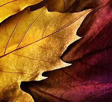 Close up of colorful  leaf orange and violet with texture by JoelVieira