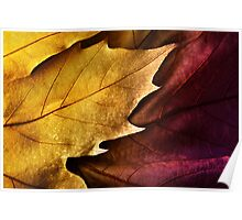 Close up of colorful  leaf orange and violet with texture Poster