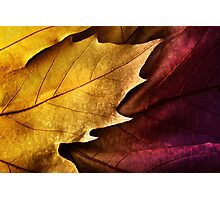 Close up of colorful  leaf orange and violet with texture Photographic Print